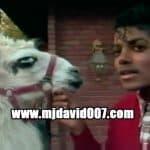 Michael Jackson and his llama in Encino 1983